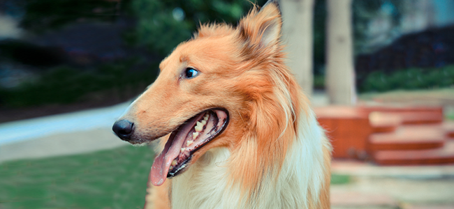 Dog (Image Credit: Jeff Ro)
