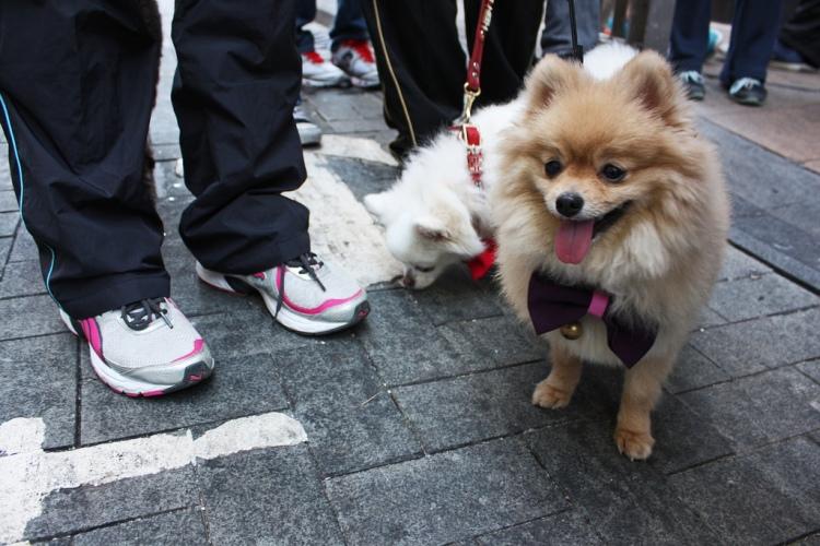 Dog with Bowtie (Image Credit: Flickr User Istolethetv)