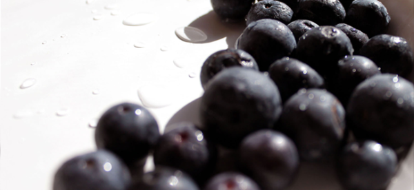 Blueberries (Image Credit: Daniella Segura)