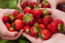 Strawberries (Image Credit: James Lee)