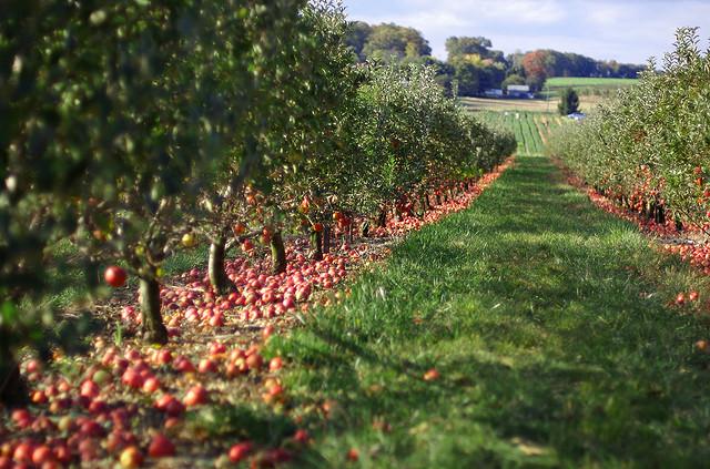 Orchard (Image Credit: Jeff Kubina)