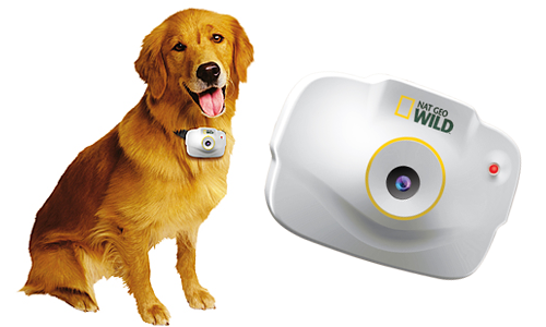 National Geographic Pet's Eye View Camera (Image Credit: National Geographic)