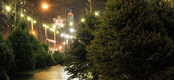Christmas Tree Lot (Image Credit: Ralph Hockens)