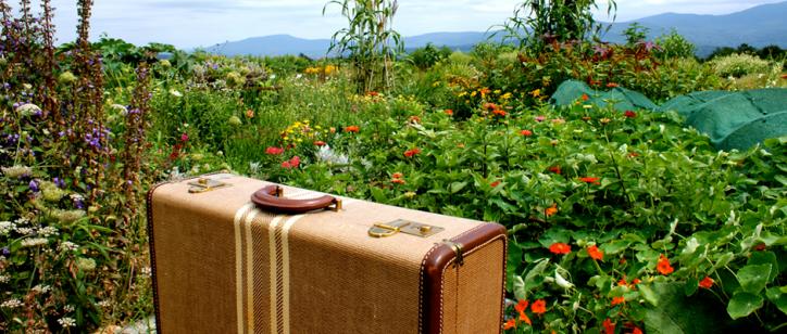 Suitcase (Image Credit: Karen Cox)