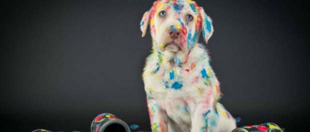 10 ways to own a dog is like having a toddler – The Daily Quirk